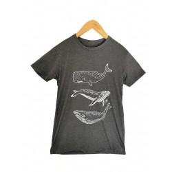 Baleines -  HOMME